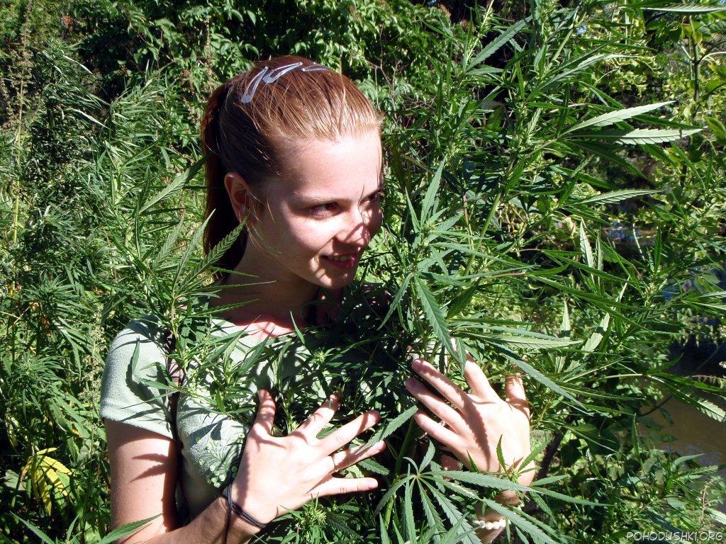 Срочно марихуана как выглядит конопляное семя