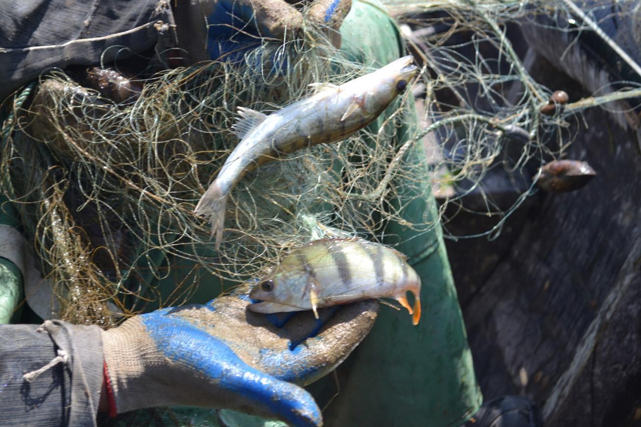 как браконьеры ловят рыбу