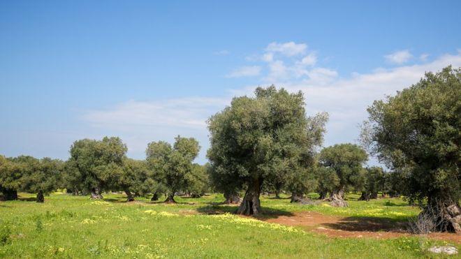 Ученые: Глобальное потепление может превратить некоторые части Южной Европы впустыню