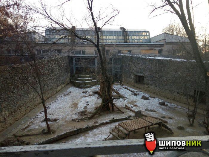 Вгосударстве Украина вНиколаевском зоопарке дворник умер ввольере стиграми