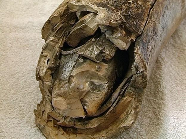 ВИвано-Франковской области найден бивень мамонта