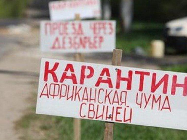 В новейшей Одессе зафиксирован очередной случай африканской чумы свиней