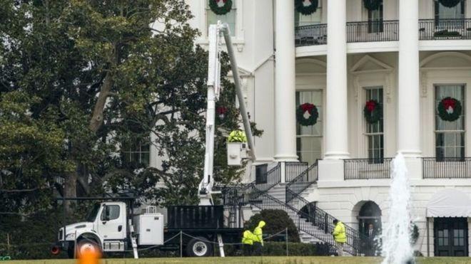Первая леди США решила спилить 200-летнее дерево под Белым домом