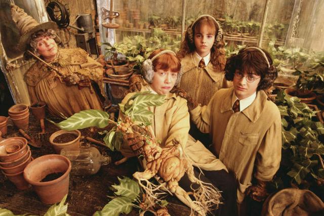 Библиотека отказалась отГарри Поттера вНовосибирске из-за рецептов зелий