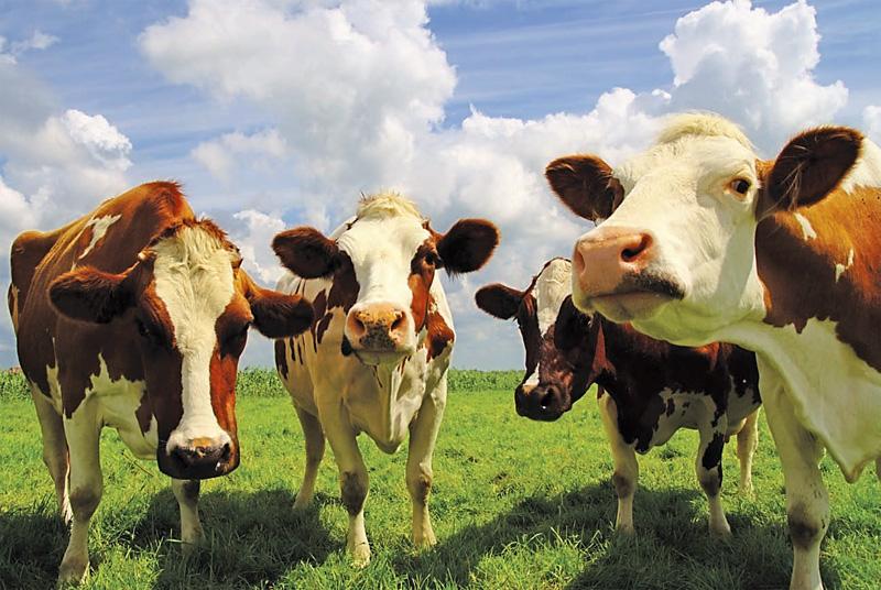 Импорт мяса вУкраину вырастет на20%