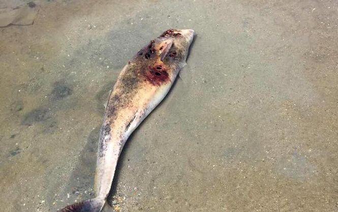 Волны выбросили наберег трупы дельфинов— Грустное зрелище