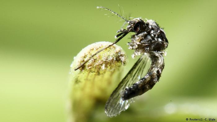 ВИндии обнаружили вирус Зика: призывают непаниковать