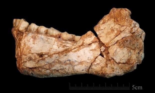 Ученые: Разделение нарасы случилось неменее 260 тыс. лет назад