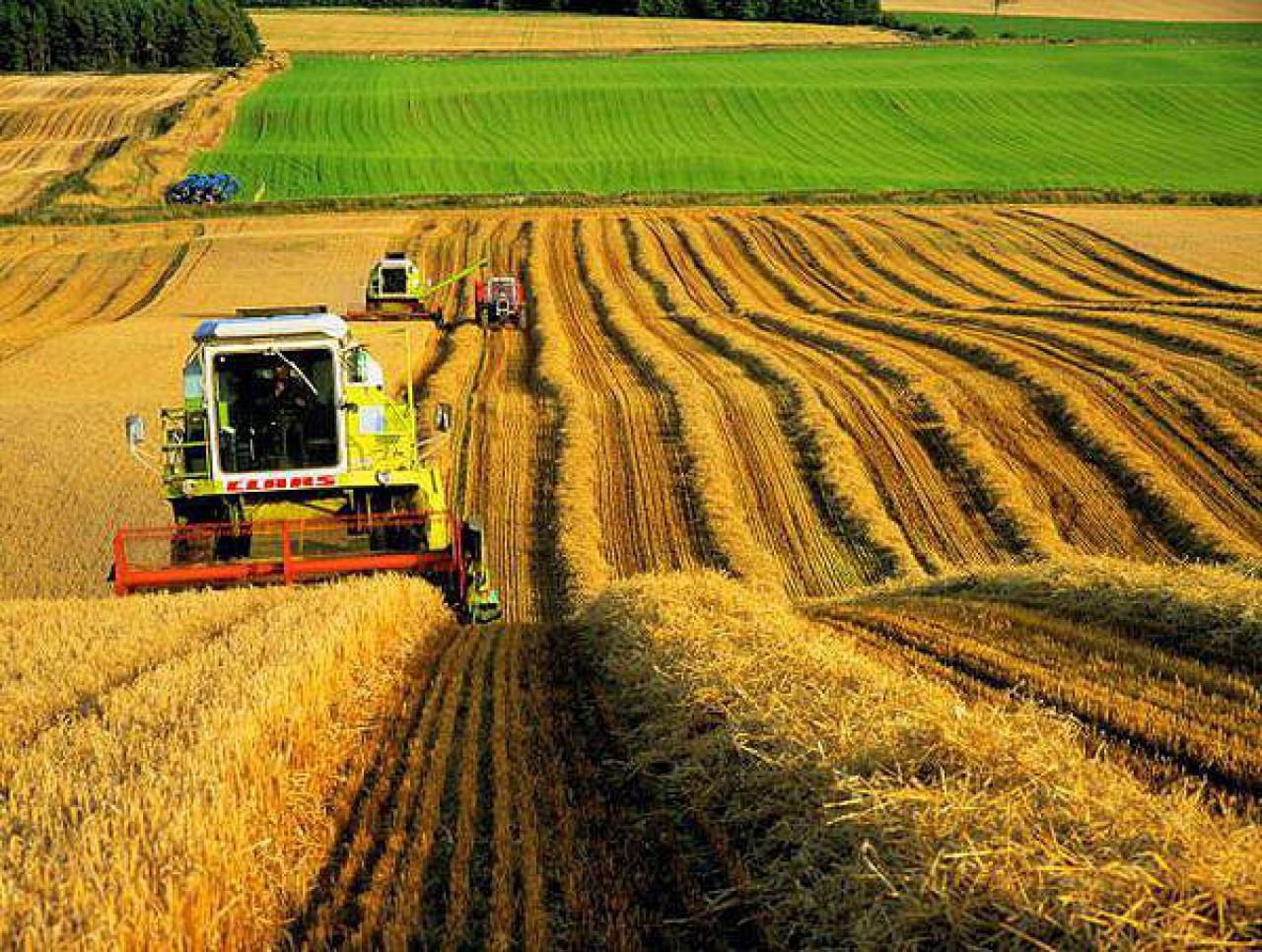 В2015 году 15 областей Украинского государства собрали рекордный урожай зерновых
