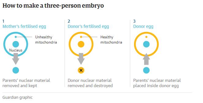 В Великобритании разрешили создавать детей из ДНК трех человек