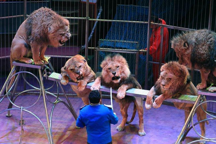 Минкульт планирует запретить использование животных в цирках